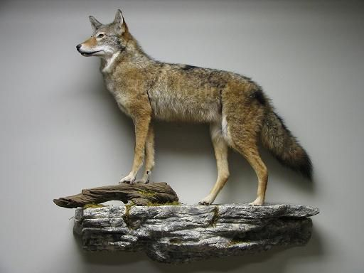 Back To Life Taxidermy